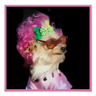 Fashionable Toy MIx Dog Poster