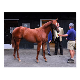 Fasig Tipton Select Sales at Saratoga Postcard