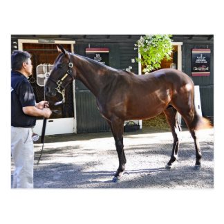 Fasig Tipton Yearling Auctions Post Cards