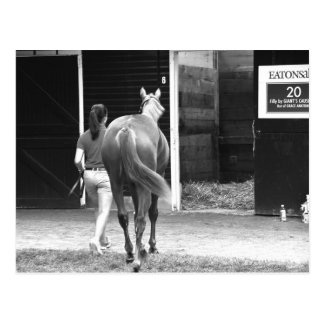 Fasig Tipton Yearling Auctions Postcard