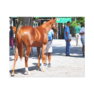 Fasig Tipton Yearling Sales Canvas Print