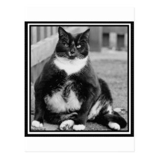 FAT CAT CHILLING POSTCARD