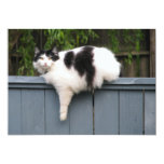 Fat Cat On Fence 5x7 Paper Invitation Card