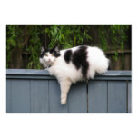 Fat Cat On Fence Large Business Cards (Pack Of 100)