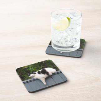 Fat Cat On Fence Drink Coaster