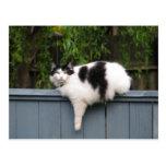 Fat Cat On Fence Postcard