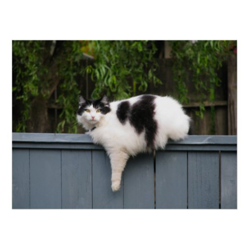 Fat Cat On Fence Poster
