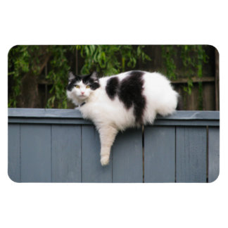 Fat Cat On Fence Rectangle Magnets