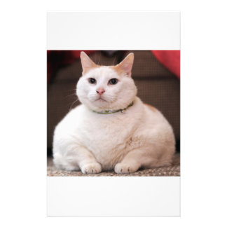Fat Cat Customized Stationery