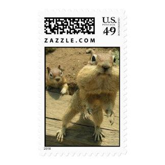 fat cheek squirrel stamp