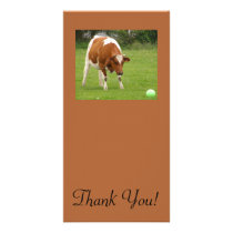 Fat Cow, Ball and Dandilion Puggs Card