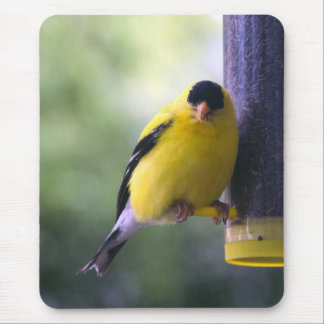 Fat Finch Mouse Pad