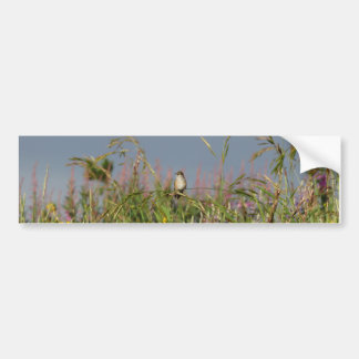 Fat little Hummingbird Bumper Sticker