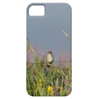 Fat little Hummingbird iPhone 5 Case