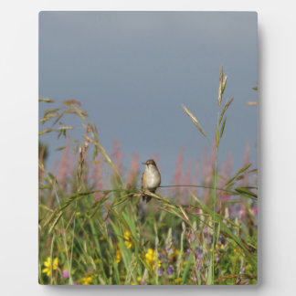 Fat little Hummingbird Photo Plaques