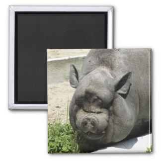 Fat Piggy   Farmland 2 Inch Square Magnet