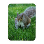 Fat Squirrel Flexible Magnet Rectangle Magnet