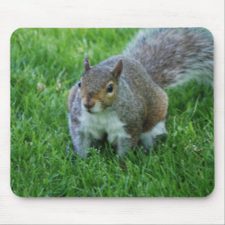 Fat Squirrel  Mouse Pad