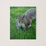 Fat Squirrel Puzzle