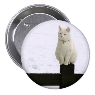 Fat white cat on a black fence button