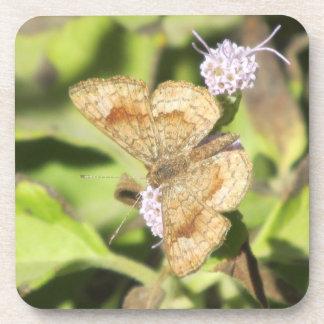 Fatal Metalmark Butterfly Coasters