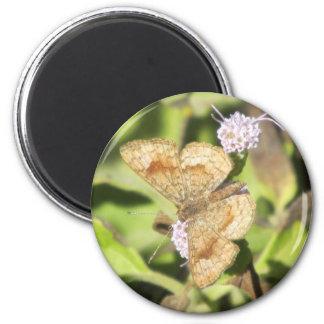 Fatal Metalmark Butterfly Magnet