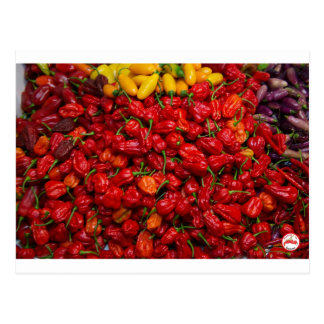Fatalii's Chile Peppers 2 Postcard