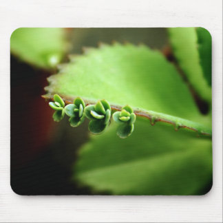 fatfatin Baby Succulents Photo Mousepad