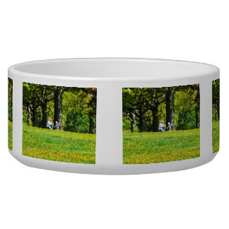 Father and Son Under the Trees Dog Bowls