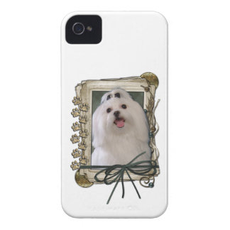 Fathers Day - Stone Paws - Maltese iPhone 4 Case