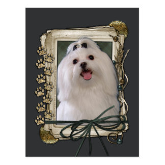 Fathers Day - Stone Paws - Maltese Postcard