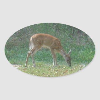 faun baby deer at Lake Arrowhead Oval Sticker