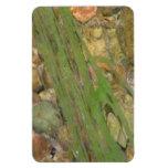 Fauna acuática de la flora de Oregon del barranco  Imanes