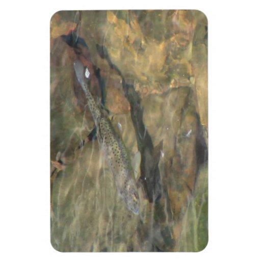 Fauna acuática de la flora de Oregon del barranco Imanes De Vinilo