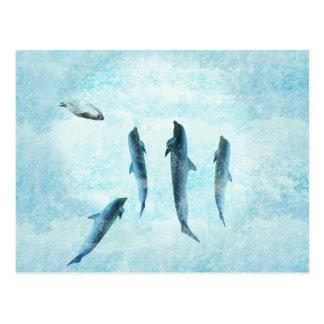 fauna acuática delfínes de baile