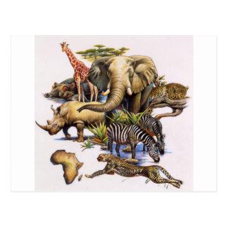 Fauna africana en concierto postales