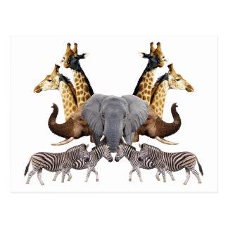 Fauna africana II Postales