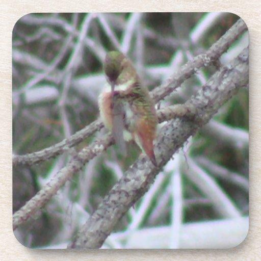 Fauna animal de Aves del pájaro de Oregon del Posavasos