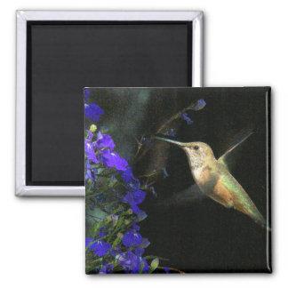 Fauna animal del pájaro del colibrí floral imán cuadrado