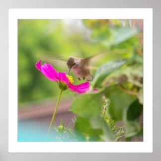 Fauna animal del pájaro del colibrí floral póster