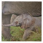 Fauna de África, Kenia, elefante del bebé Azulejo Cuadrado Grande