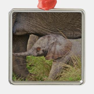 Fauna de África, Kenia, elefante del bebé Adorno De Navidad
