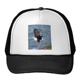Fauna de Alaska Gorras