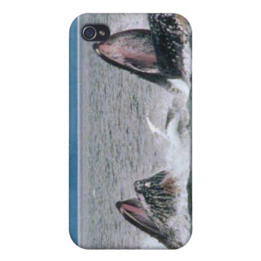 Fauna de Alaska iPhone 4 Fundas