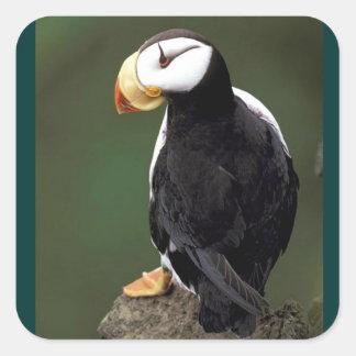 Fauna de Alaska Pegatina Cuadrada