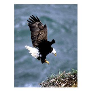 Fauna de Alaska Postales