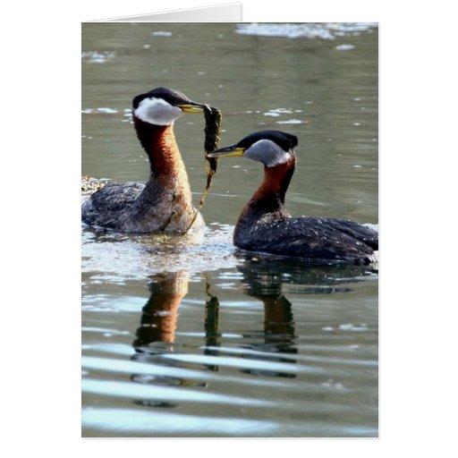 Fauna de Alaska Tarjeta De Felicitación