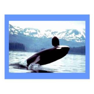 Fauna de Alaska Tarjeta Postal
