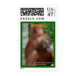 Fauna de Borneo Sellos Postales