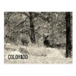 Fauna de Colorado Postales
